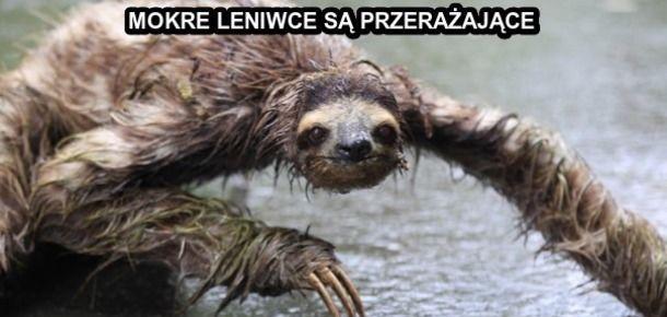 Mokre leniwce