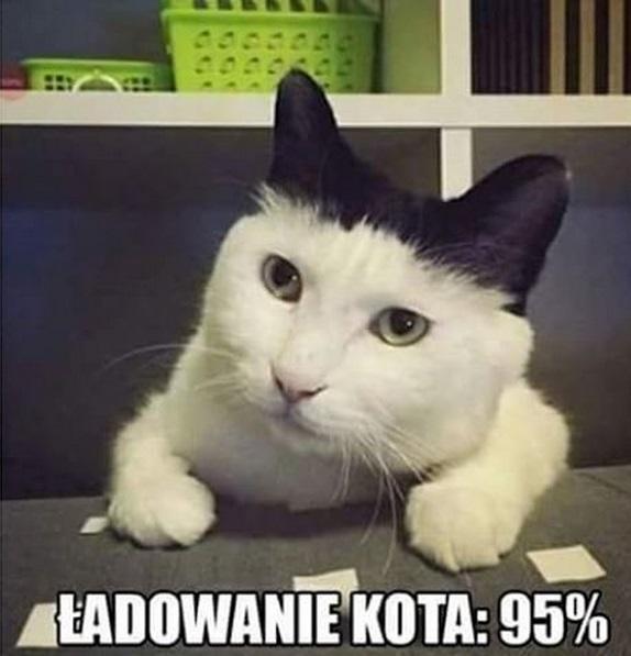 Ładowanie kota