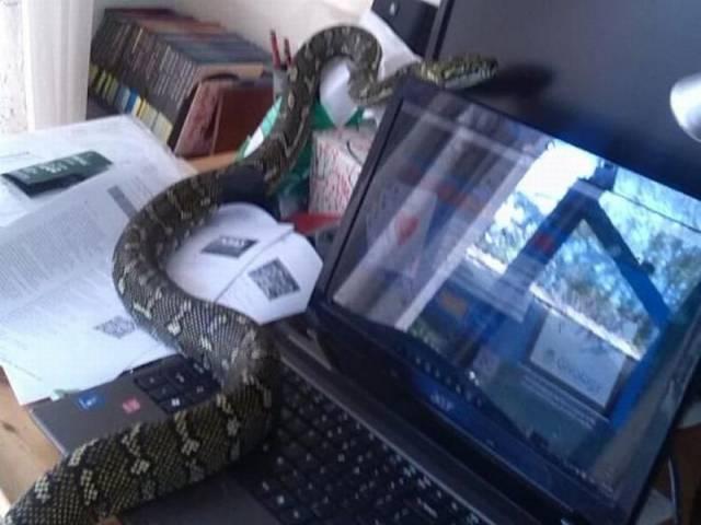 Wąż komputerowy