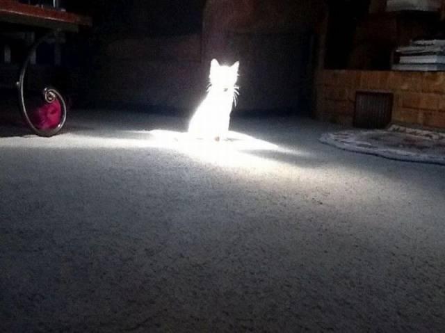 Święcący kot
