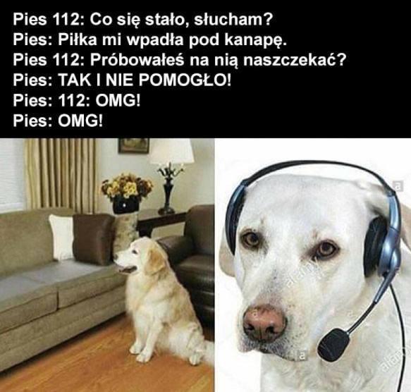Pies112