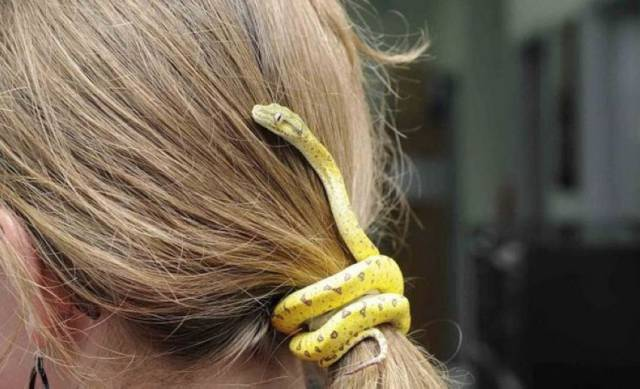 Wąż zamiast gumki